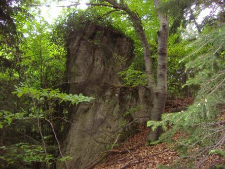 p5072057 444x333 - Zwergerlhöhlen, Malleiten