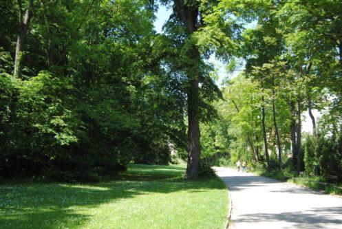 PoetzleinsdorferSchlosspark 006 497x333 - Kraftplätze & Kultbäume im Pötzleinsdorfer Schlosspark