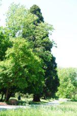 PoetzleinsdorferSchlosspark 007 152x227 - Kraftplätze & Kultbäume im Pötzleinsdorfer Schlosspark