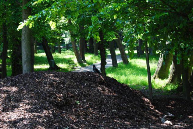 PoetzleinsdorferSchlosspark 008 633x424 - Kraftplätze & Kultbäume im Pötzleinsdorfer Schlosspark