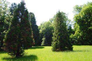 PoetzleinsdorferSchlosspark 010 314x210 - Kraftplätze & Kultbäume im Pötzleinsdorfer Schlosspark