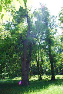 PoetzleinsdorferSchlosspark 023 208x310 - Kraftplätze & Kultbäume im Pötzleinsdorfer Schlosspark