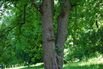 PoetzleinsdorferSchlosspark 024 335x225 - Kraftplätze & Kultbäume im Pötzleinsdorfer Schlosspark