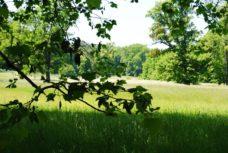 PoetzleinsdorferSchlosspark 025 228x153 - Kraftplätze & Kultbäume im Pötzleinsdorfer Schlosspark