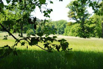 PoetzleinsdorferSchlosspark 025 335x225 - Kraftplätze & Kultbäume im Pötzleinsdorfer Schlosspark