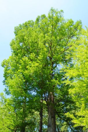 PoetzleinsdorferSchlosspark 027 304x454 - Kraftplätze & Kultbäume im Pötzleinsdorfer Schlosspark