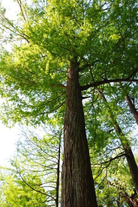 PoetzleinsdorferSchlosspark 033 1 449x671 - Kraftplätze & Kultbäume im Pötzleinsdorfer Schlosspark