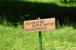 PoetzleinsdorferSchlosspark 044 263x176 - Kraftplätze & Kultbäume im Pötzleinsdorfer Schlosspark