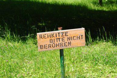 PoetzleinsdorferSchlosspark 044 385x258 - Kraftplätze & Kultbäume im Pötzleinsdorfer Schlosspark