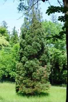 PoetzleinsdorferSchlosspark 051 235x351 - Kraftplätze & Kultbäume im Pötzleinsdorfer Schlosspark