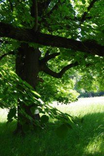 PoetzleinsdorferSchlosspark 056 214x320 - Kraftplätze & Kultbäume im Pötzleinsdorfer Schlosspark