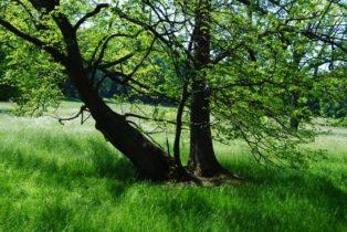 PoetzleinsdorferSchlosspark 059 314x210 - Kraftplätze & Kultbäume im Pötzleinsdorfer Schlosspark