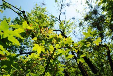 PoetzleinsdorferSchlosspark 063 385x258 - Kraftplätze & Kultbäume im Pötzleinsdorfer Schlosspark