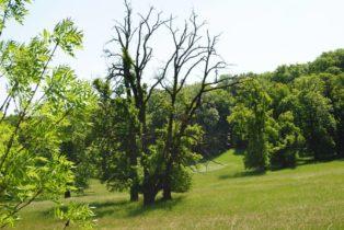 PoetzleinsdorferSchlosspark 065 314x210 - Kraftplätze & Kultbäume im Pötzleinsdorfer Schlosspark