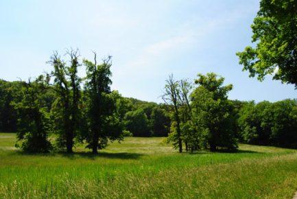PoetzleinsdorferSchlosspark 066 433x290 - Kraftplätze & Kultbäume im Pötzleinsdorfer Schlosspark