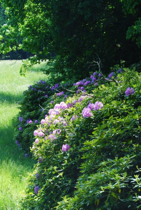 PoetzleinsdorferSchlosspark 067 474x707 - Kraftplätze & Kultbäume im Pötzleinsdorfer Schlosspark