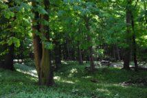 PoetzleinsdorferSchlosspark 072 214x143 - Kraftplätze & Kultbäume im Pötzleinsdorfer Schlosspark