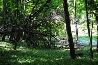 PoetzleinsdorferSchlosspark 073 314x210 - Kraftplätze & Kultbäume im Pötzleinsdorfer Schlosspark