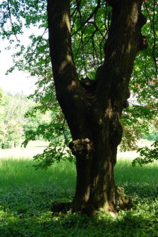 PoetzleinsdorferSchlosspark_082
