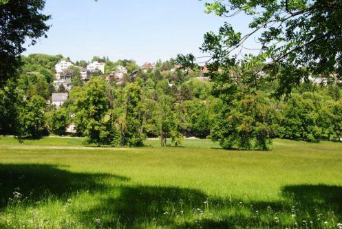 PoetzleinsdorferSchlosspark 085 497x333 - Kraftplätze & Kultbäume im Pötzleinsdorfer Schlosspark