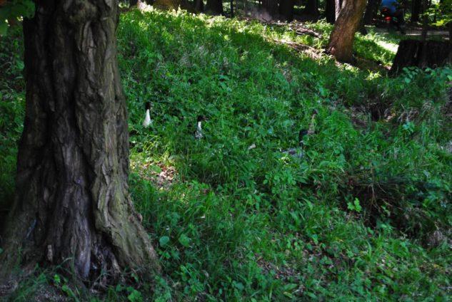 PoetzleinsdorferSchlosspark 093 633x424 - Kraftplätze & Kultbäume im Pötzleinsdorfer Schlosspark