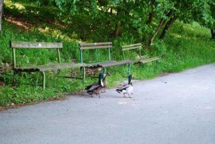 PoetzleinsdorferSchlosspark 095 314x210 - Kraftplätze & Kultbäume im Pötzleinsdorfer Schlosspark