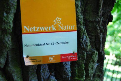 PoetzleinsdorferSchlosspark 109 497x333 - Kraftplätze & Kultbäume im Pötzleinsdorfer Schlosspark