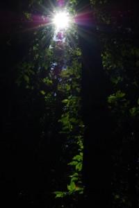 Sonn-Blick im Wunderwald