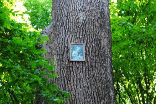 PoetzleinsdorferSchlosspark 119 498x333 - Kraftplätze & Kultbäume im Pötzleinsdorfer Schlosspark