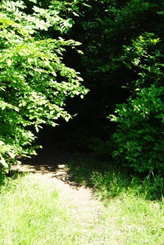PoetzleinsdorferSchlosspark_129