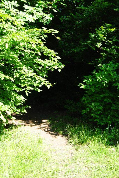 PoetzleinsdorferSchlosspark 129 474x707 - Kraftplätze & Kultbäume im Pötzleinsdorfer Schlosspark