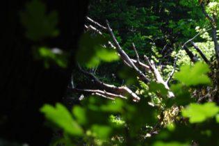 PoetzleinsdorferSchlosspark 132 315x210 - Kraftplätze & Kultbäume im Pötzleinsdorfer Schlosspark