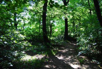PoetzleinsdorferSchlosspark 143 335x225 - Kraftplätze & Kultbäume im Pötzleinsdorfer Schlosspark