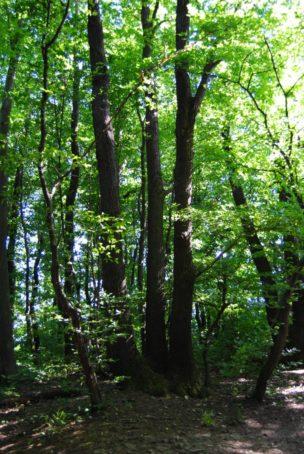 PoetzleinsdorferSchlosspark 146 304x454 - Kraftplätze & Kultbäume im Pötzleinsdorfer Schlosspark