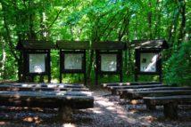 PoetzleinsdorferSchlosspark 151 214x143 - Kraftplätze & Kultbäume im Pötzleinsdorfer Schlosspark