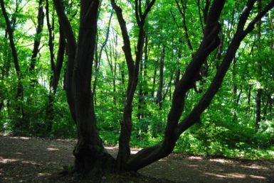 PoetzleinsdorferSchlosspark 153 385x258 - Kraftplätze & Kultbäume im Pötzleinsdorfer Schlosspark