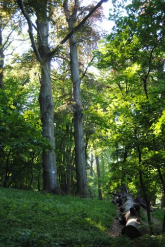 PoetzleinsdorferSchlosspark_164