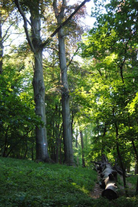 PoetzleinsdorferSchlosspark 164 473x707 - Kraftplätze & Kultbäume im Pötzleinsdorfer Schlosspark