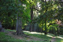 PoetzleinsdorferSchlosspark 168 214x143 - Kraftplätze & Kultbäume im Pötzleinsdorfer Schlosspark
