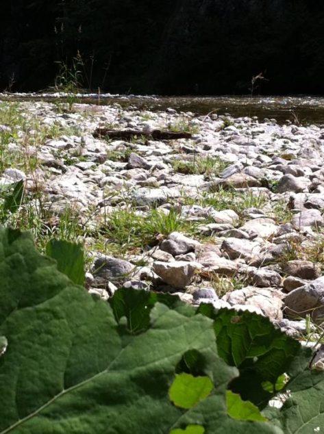 HoellentalSchwarza 003 473x634 - Besuch in Hels Tal: die Schwarza im Höllental