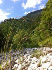 HoellentalSchwarza 015 201x269 - Besuch in Hels Tal: die Schwarza im Höllental