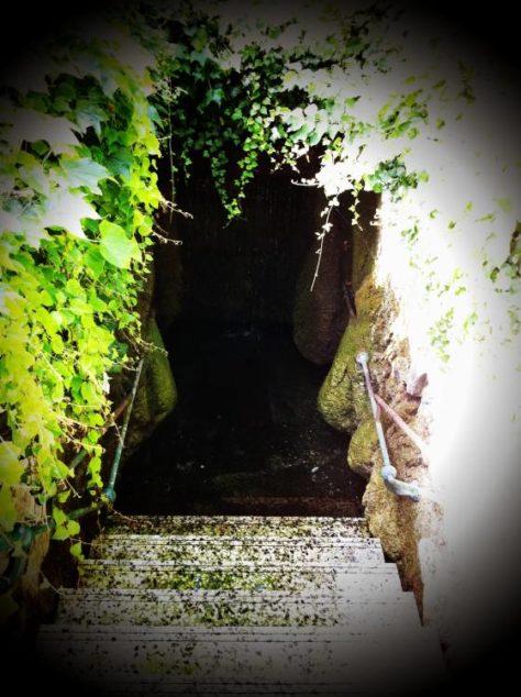 KristallthermeBadFischau 009 474x634 - Bad Fischauer Thermalbad: Schwimmen, wo schon die Römer und Kelten gebadet haben ...