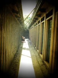 juli2011  301 202x271 - Bad Fischauer Thermalbad: Schwimmen, wo schon die Römer und Kelten gebadet haben ...