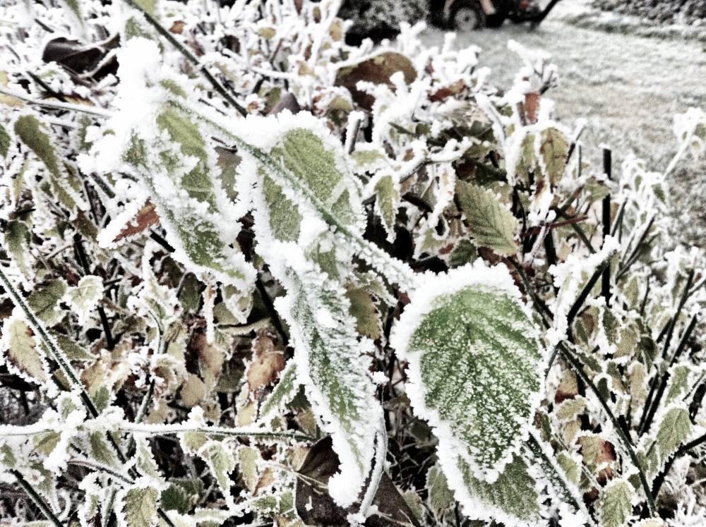 Naturwunderweiss 018 - Der Jänner: Schneemonat, Hartung, drei Madln und Buam