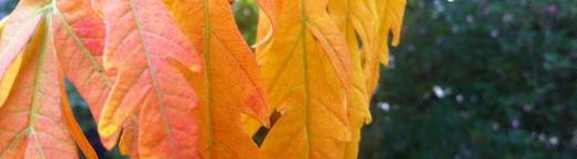 herbstlaub news - Wann ist eigentlich Erntedank und Herbstbeginn?!
