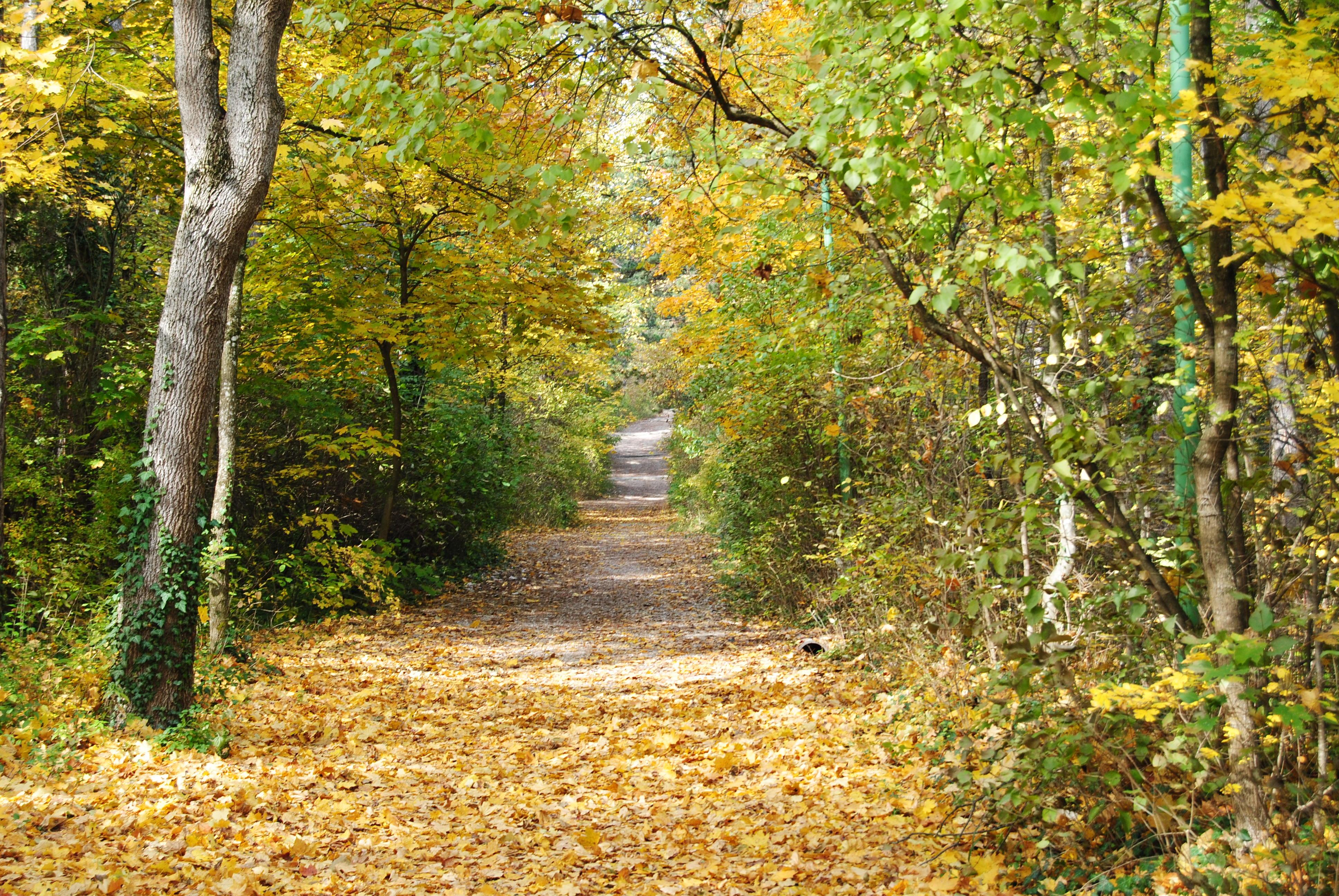 DSC 2583 - Der September: Scheiding, Erntedank und Almabtrieb