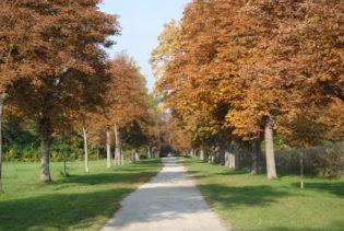 MILAK Park Herbst 2013 003 315x211 - Herbstzauber im MILAK Park