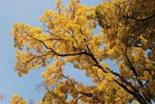 MILAK Park Herbst 2013 006 314x211 - Herbstzauber im MILAK Park