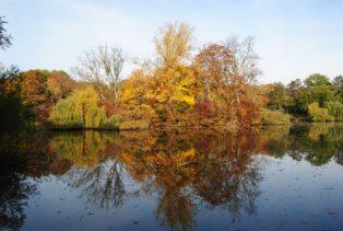 MILAK Park Herbst 2013 013 314x211 - Herbstzauber im MILAK Park