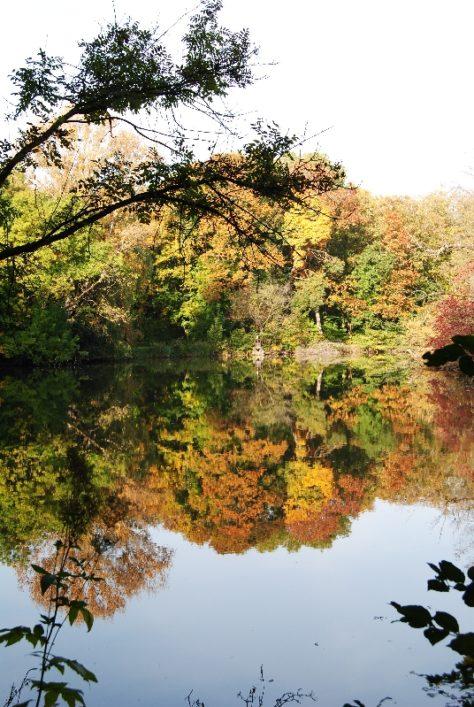 MILAK Park Herbst 2013 015 474x707 - Herbstzauber im MILAK Park